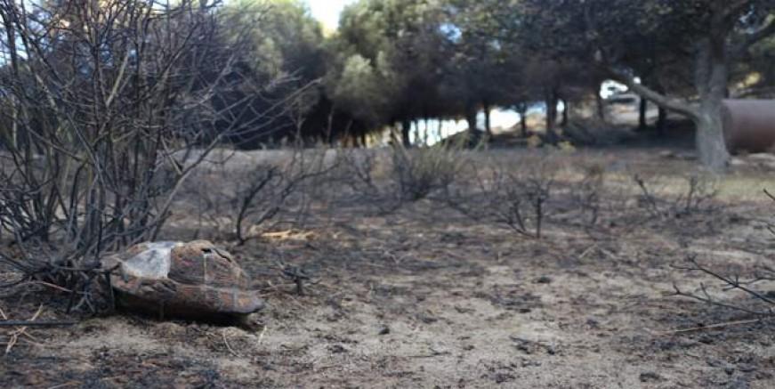 Marmara Adası'ndaki yangının acı bilançosu