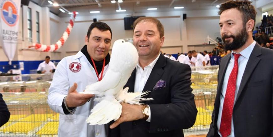 Türkiye'nin güvercinleri Maltepe'de görücüye çıktı